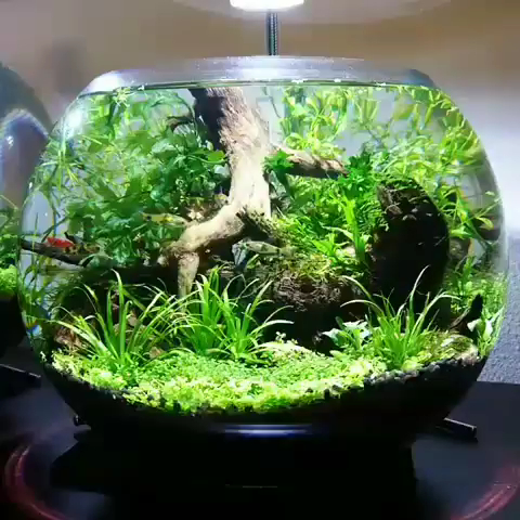 Awesome Indoor Water Garden Design Ideas That Refresh Your Interiors15