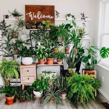 Fascinating Indoor Plants Design Ideas With Desert Atmosphere To Have10