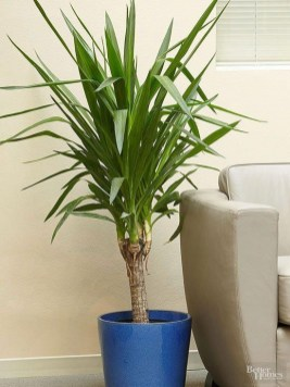 Fascinating Indoor Plants Design Ideas With Desert Atmosphere To Have11