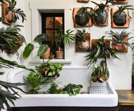 Fascinating Indoor Plants Design Ideas With Desert Atmosphere To Have14