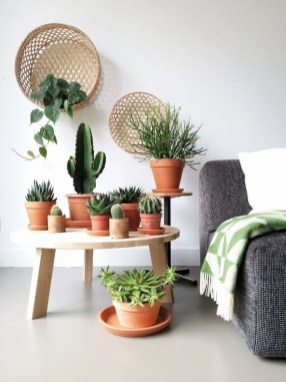 Fascinating Indoor Plants Design Ideas With Desert Atmosphere To Have15