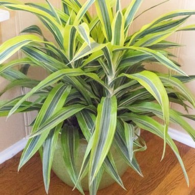 Fascinating Indoor Plants Design Ideas With Desert Atmosphere To Have16