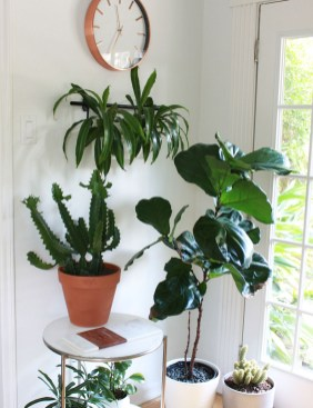 Fascinating Indoor Plants Design Ideas With Desert Atmosphere To Have26