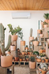 Fascinating Indoor Plants Design Ideas With Desert Atmosphere To Have31