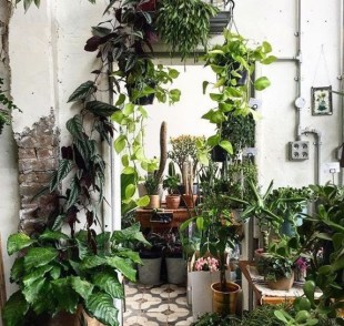 Lovely Indoor Jungle Decor Ideas To Try Asap04