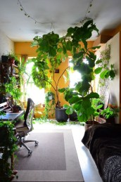Lovely Indoor Jungle Decor Ideas To Try Asap07