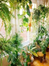 Lovely Indoor Jungle Decor Ideas To Try Asap16