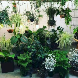 Lovely Indoor Jungle Decor Ideas To Try Asap19