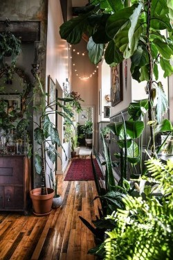 Lovely Indoor Jungle Decor Ideas To Try Asap25