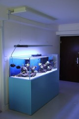 Glamorous Aquariums Design Ideas For Cool Interior Styles To Have24