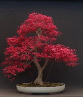 Fascinating Bonsai Tree Design Ideas For Your Room04