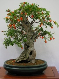 Fascinating Bonsai Tree Design Ideas For Your Room13
