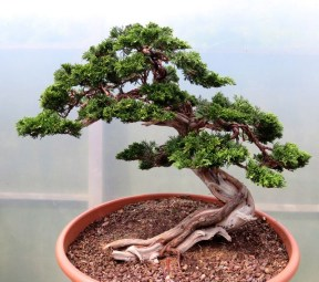 Fascinating Bonsai Tree Design Ideas For Your Room27