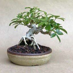 Fascinating Bonsai Tree Design Ideas For Your Room28