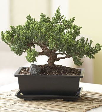 Fascinating Bonsai Tree Design Ideas For Your Room33