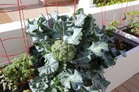 Wonderful Veggies And Fruits Potted Design Ideas For Your Garden 14