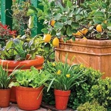 Wonderful Veggies And Fruits Potted Design Ideas For Your Garden 19