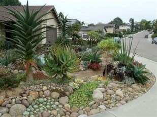 Beautiful Front Yard Cactus Garden Ideas 05