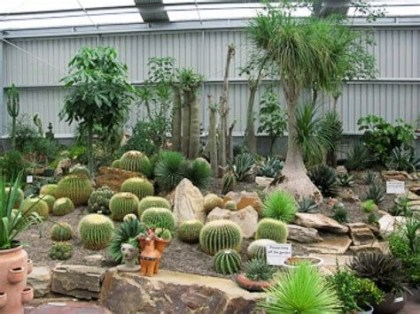 Beautiful Front Yard Cactus Garden Ideas 25
