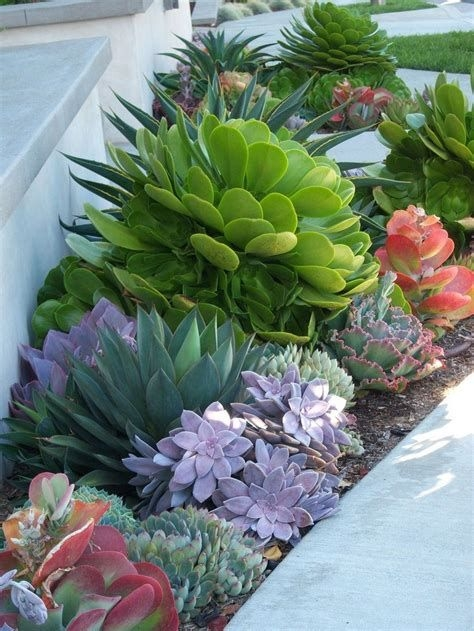Beautiful Front Yard Cactus Garden Ideas 27