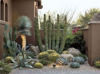 Beautiful Front Yard Cactus Garden Ideas 31