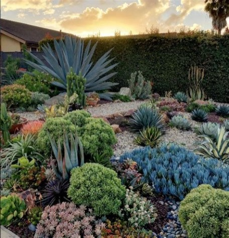 Beautiful Front Yard Cactus Garden Ideas 35
