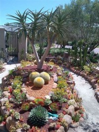 Beautiful Front Yard Cactus Garden Ideas 37