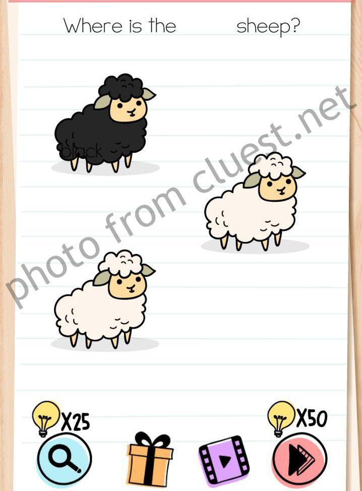 Level 20 Brain Test : level, brain, Brain, Level, Where, Black, Sheep, Answers, CLUEST