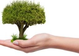 """Cluj. O facultate plantează câte un copac pentru fiecare notă de 10 din sesiune. """"Împreună vom reuşi să plantăm pădurea FSPAC! Notele voastre de 10 se transformă în copaci plantați. Vă mulțumim pentru..."""" 6"""