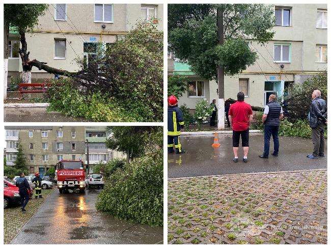 Un copac a fost doborât de fulger lângă un bloc din Câmpia Turzii! 1