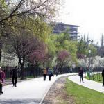 Aleea Parcul Babes si Parcul Rozelor