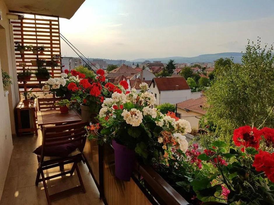 Clujul cu flori | Cum sunt îndemnaţi clujenii să îşi împodobească cu flori balcoanele şi ferestrele