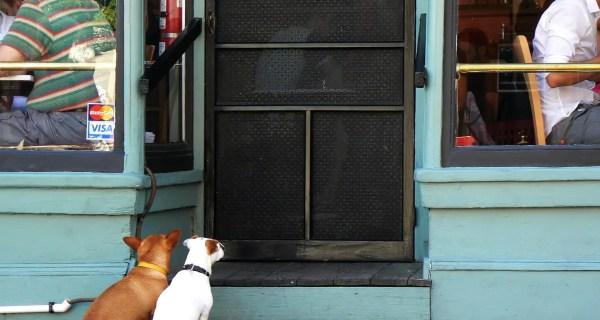 Petiţie: Vrem permis accesul cu câinii în spaţiile publice magazine restaurante