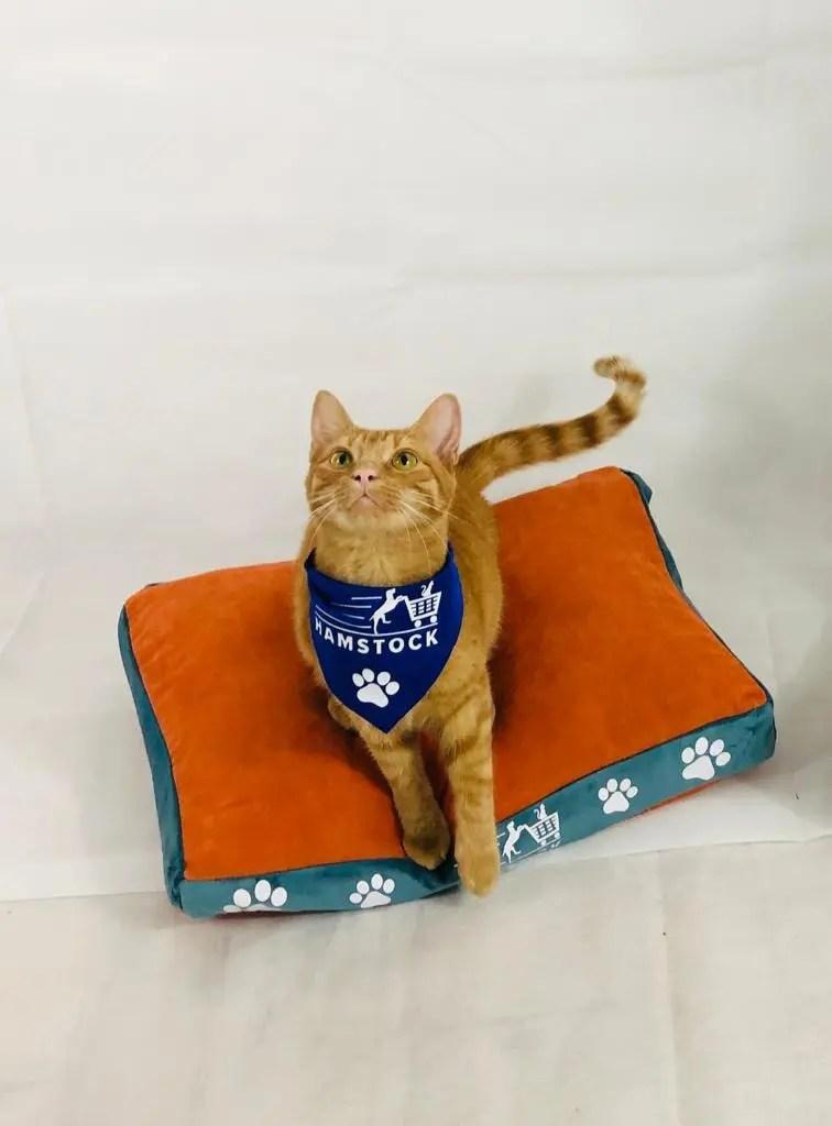 pat pentru pisici