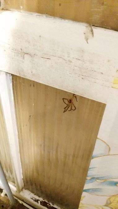 Dead Spider in the shower, berk.jpg