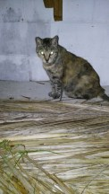 Satan's Cat, 20 y. old too...