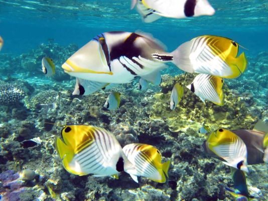 The white/black one is a £%&$%, that's a triggerfish and as it is very VERY territorial, it will proceed to swim violently towards you if you come into its area. Sometimes bite a bit, doesn't hurt but he's still a £$%&.