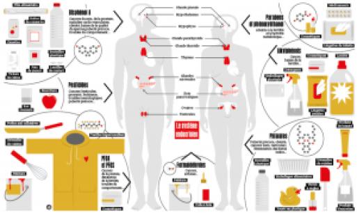 les-perturbateurs-endocriniens-infographie-l harmonie d ardwen