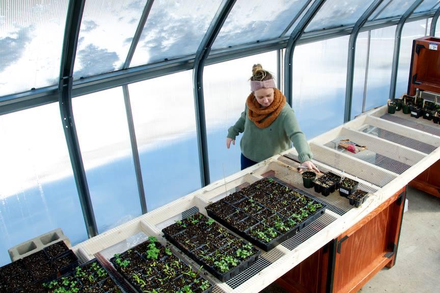 Volunteers caring for school garden plant starts