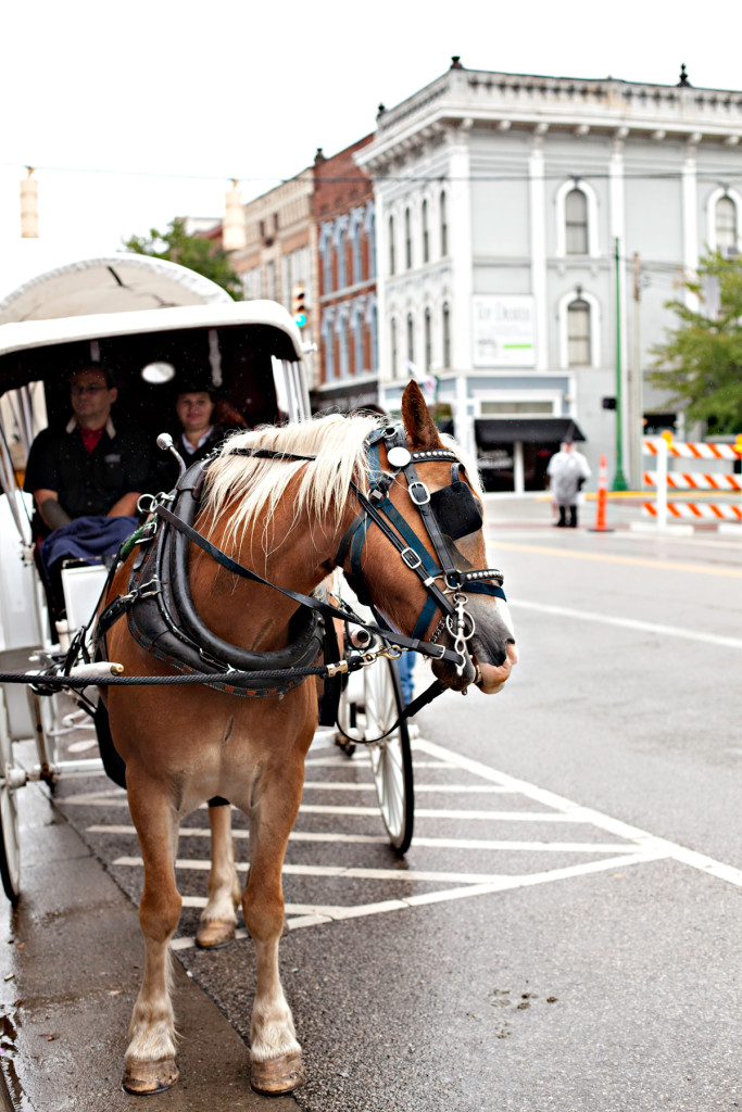 Downtown Carriage Rides © Melanie Roby