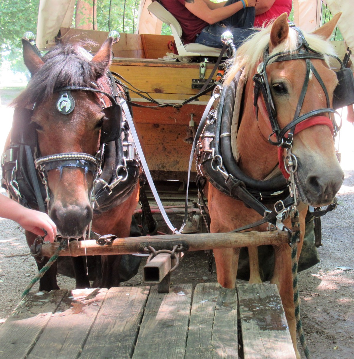 Horse drawn wagon tours are available on the island