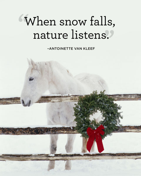 """When snow falls, nature listens."""