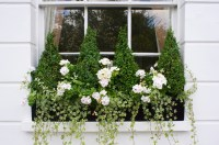 18 Fun Gardening Ideas For Your Window Boxes