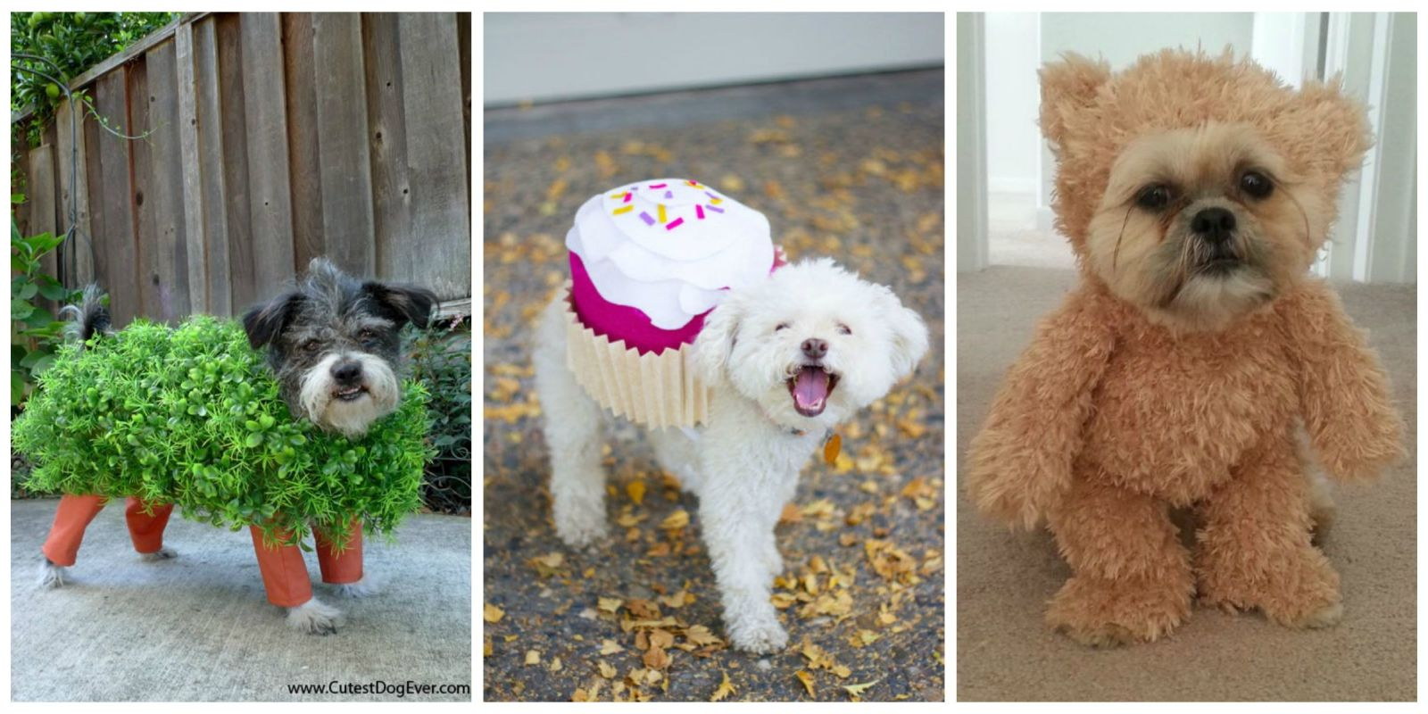 25 Cute Dog and Cat Halloween Costumes