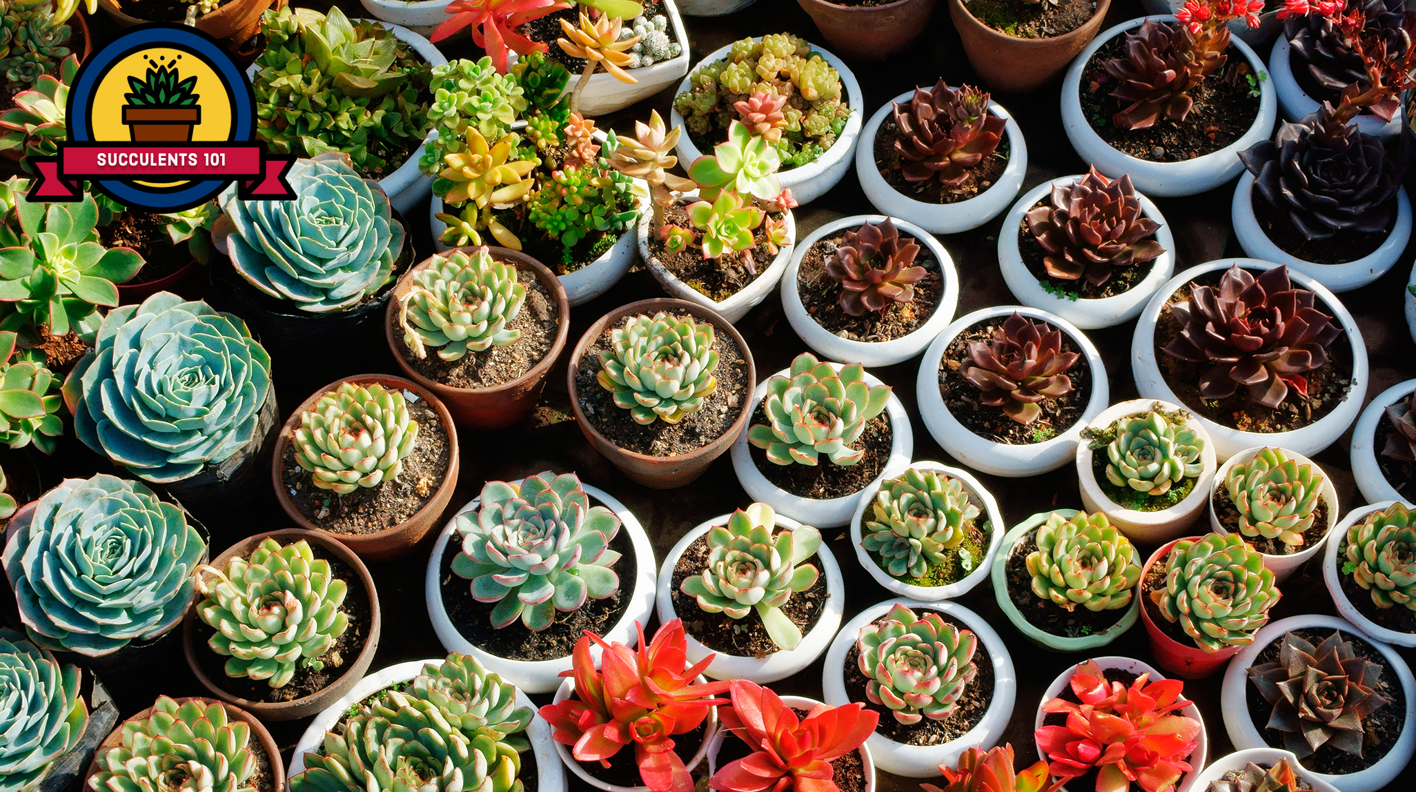 25 Succulent Plant Types