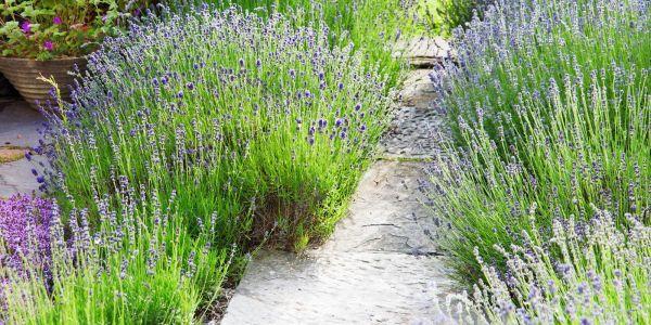 easy plants grow - cheap hardy