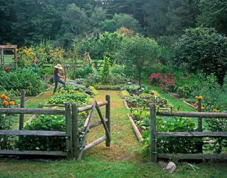 kitchen garden - organic herb
