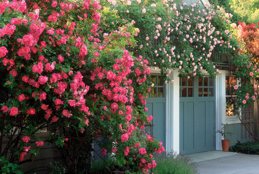 6 English Garden Design Ideas How To Make An English Garden