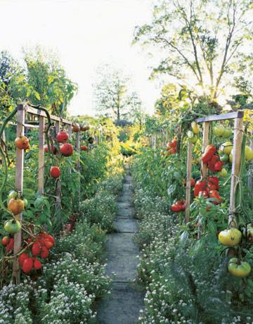 Pinterest Gardening Ideas Outdoor Garden Trends