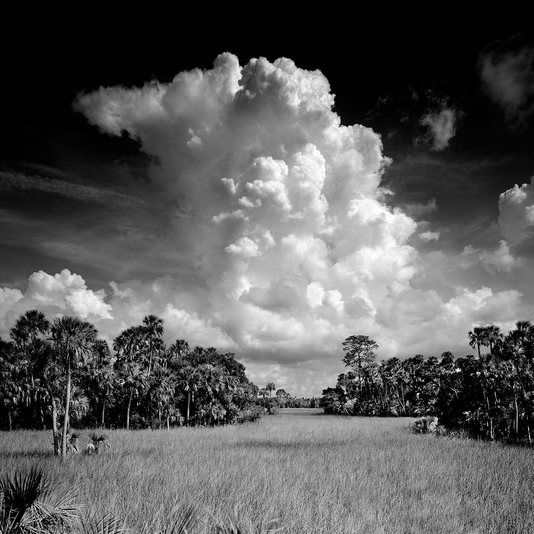 Birds West Florida Coast